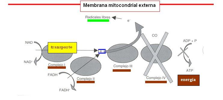 lipidos complejos esteroides